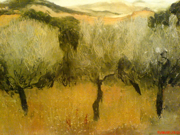 Italy Olive Trees